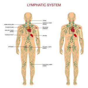 Introduction class of Lymphatic Drainage Massage 10:00 – 3:00